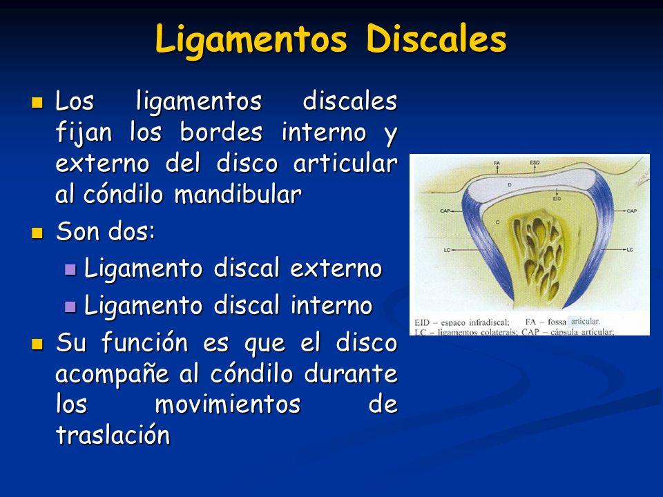 Ligamentos Discales Los ligamentos discales fijan los bordes interno y externo del disco articular al cóndilo mandibular Los ligamentos discales fijan