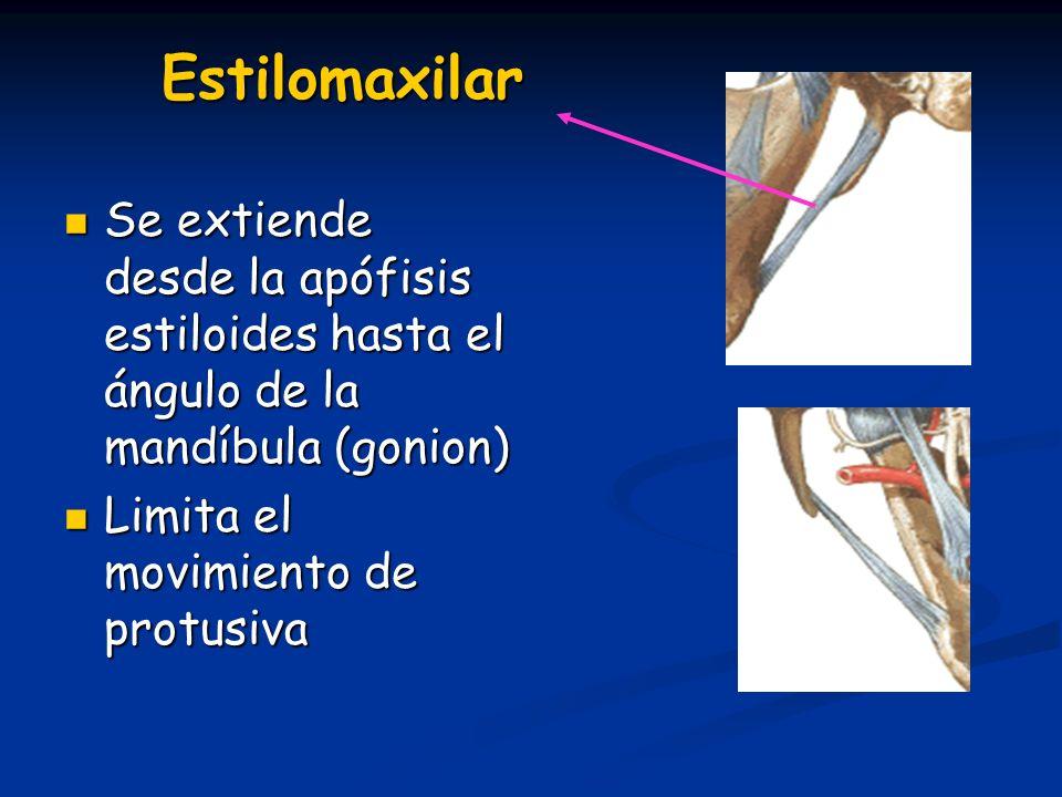 Estilomaxilar Se extiende desde la apófisis estiloides hasta el ángulo de la mandíbula (gonion) Se extiende desde la apófisis estiloides hasta el ángu