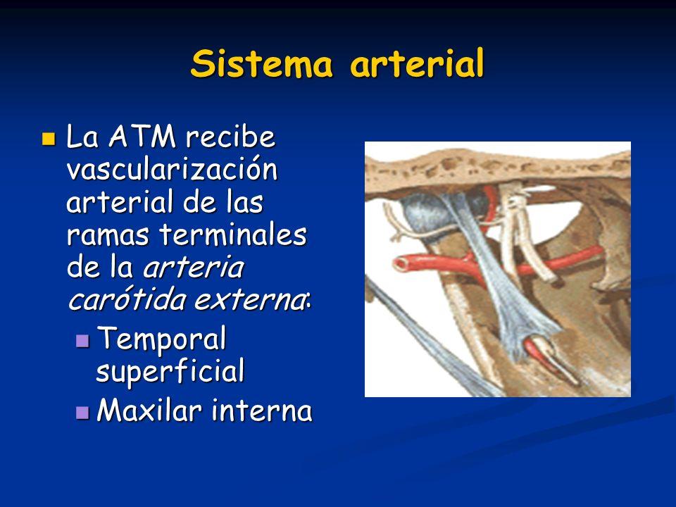Sistema arterial La ATM recibe vascularización arterial de las ramas terminales de la arteria carótida externa: La ATM recibe vascularización arterial