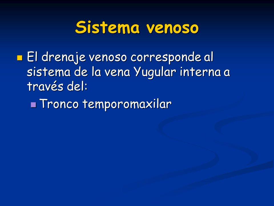 Sistema venoso El drenaje venoso corresponde al sistema de la vena Yugular interna a través del: El drenaje venoso corresponde al sistema de la vena Y