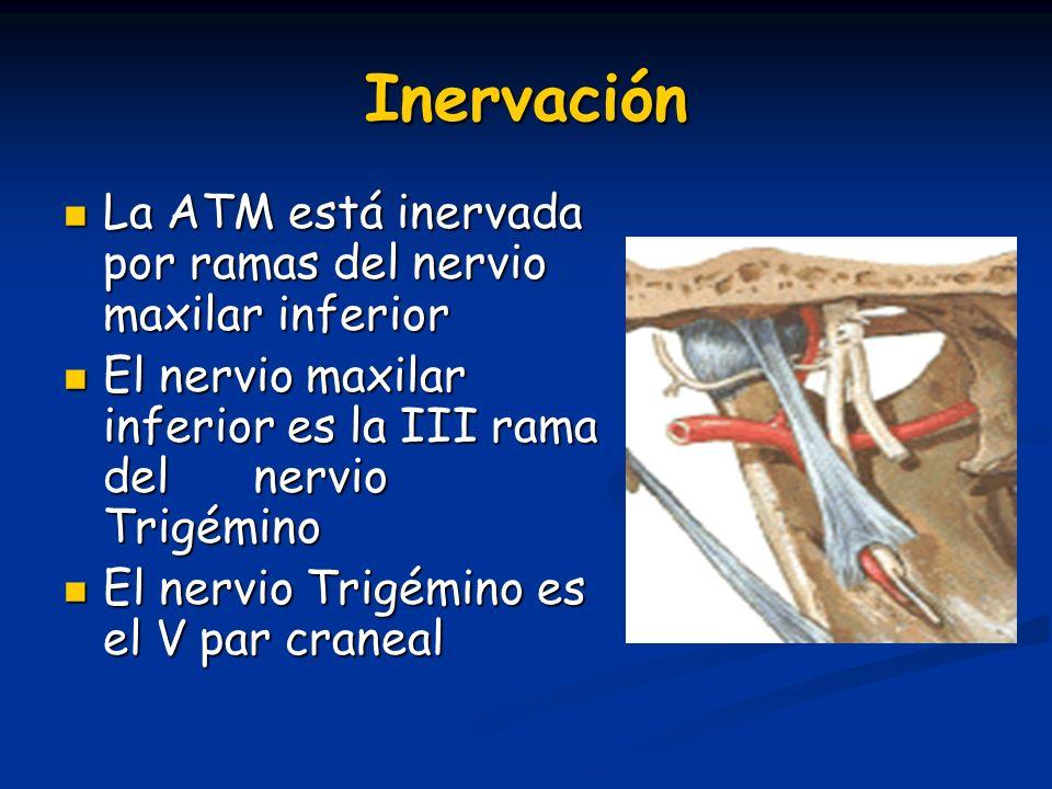 Inervación La ATM está inervada por ramas del nervio maxilar inferior La ATM está inervada por ramas del nervio maxilar inferior El nervio maxilar inf