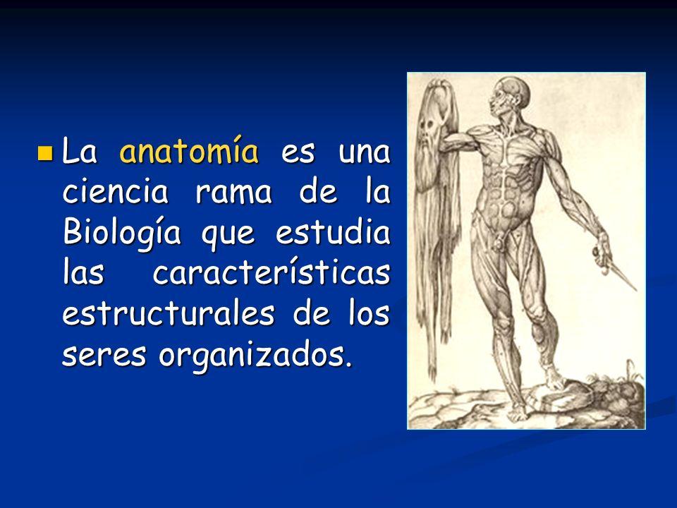 La anatomía es una ciencia rama de la Biología que estudia las características estructurales de los seres organizados. La anatomía es una ciencia rama
