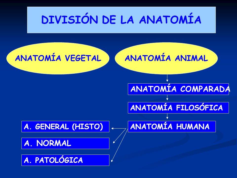 DIVISIÓN DE LA ANATOMÍA ANATOMÍA VEGETALANATOMÍA ANIMAL ANATOMÍA HUMANA ANATOMÍA COMPARADA ANATOMÍA FILOSÓFICA A. GENERAL (HISTO ) A. NORMAL A. PATOLÓ