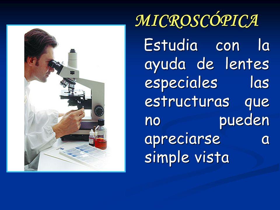 MICROSCÓPICA Estudia con la ayuda de lentes especiales las estructuras que no pueden apreciarse a simple vista Estudia con la ayuda de lentes especial