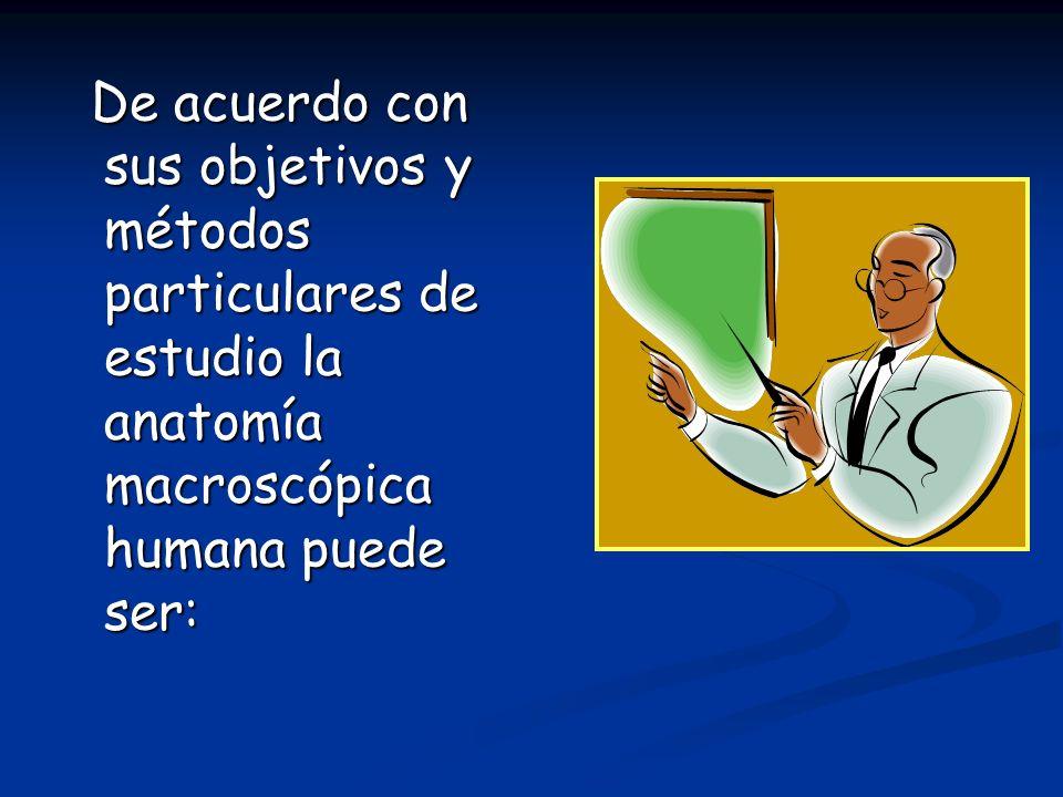 De acuerdo con sus objetivos y métodos particulares de estudio la anatomía macroscópica humana puede ser: De acuerdo con sus objetivos y métodos parti