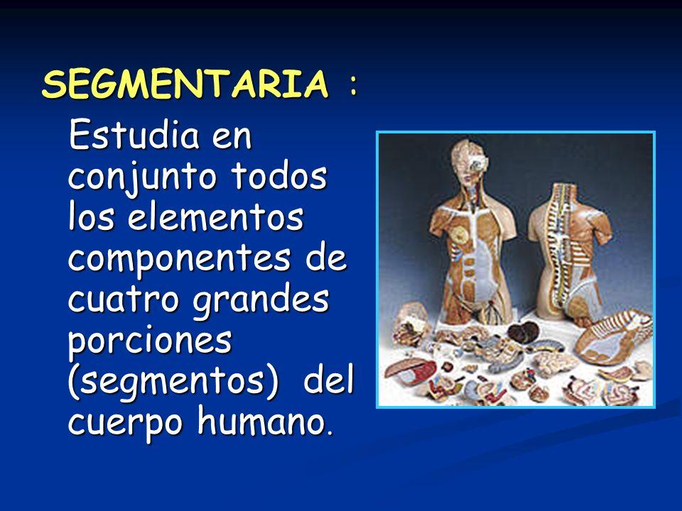 SEGMENTARIA : Estudia en conjunto todos los elementos componentes de cuatro grandes porciones (segmentos) del cuerpo humano. Estudia en conjunto todos