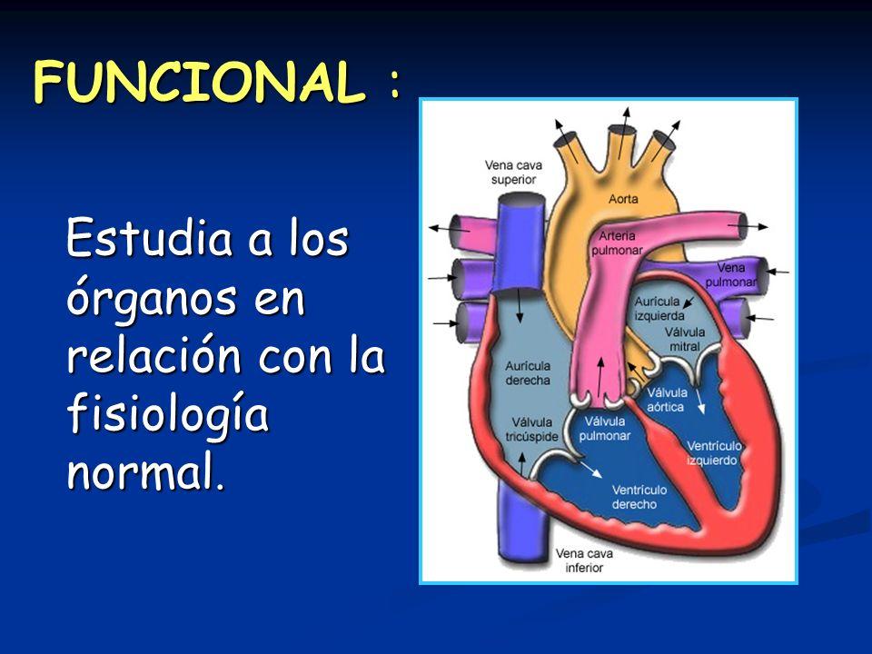 FUNCIONAL : Estudia a los órganos en relación con la fisiología normal. Estudia a los órganos en relación con la fisiología normal.