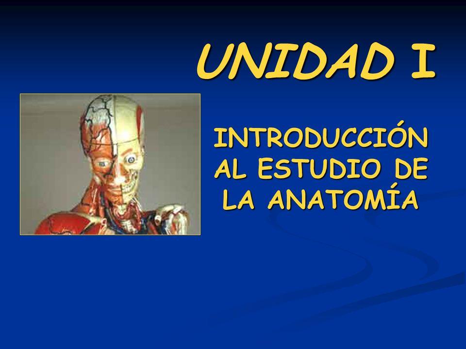 UNIDAD I INTRODUCCIÓN AL ESTUDIO DE LA ANATOMÍA