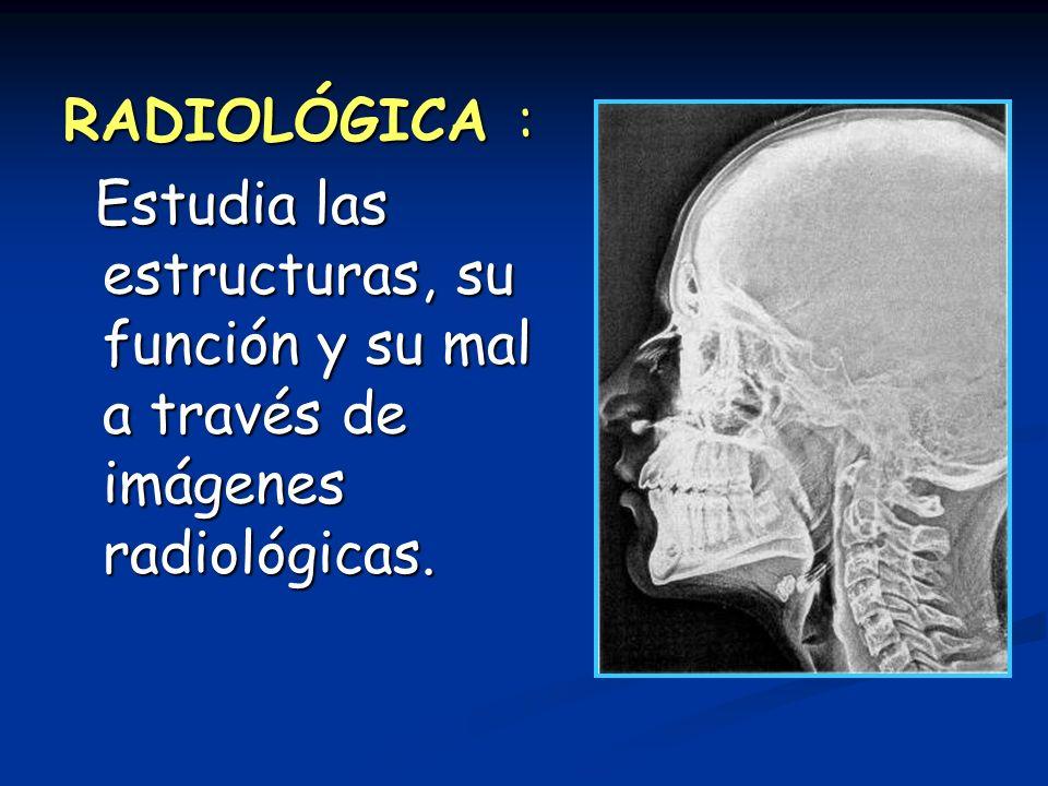 RADIOLÓGICA : Estudia las estructuras, su función y su mal a través de imágenes radiológicas. Estudia las estructuras, su función y su mal a través de
