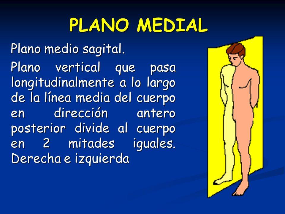 PLANO MEDIAL Plano medio sagital. Plano vertical que pasa longitudinalmente a lo largo de la línea media del cuerpo en dirección antero posterior divi