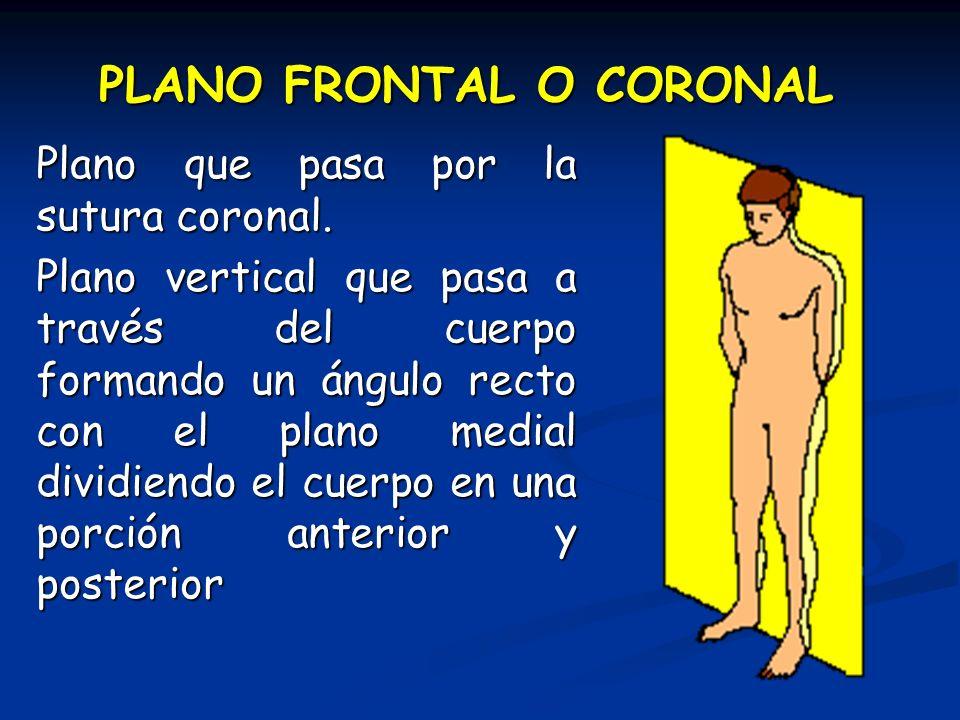 PLANO FRONTAL O CORONAL Plano que pasa por la sutura coronal. Plano vertical que pasa a través del cuerpo formando un ángulo recto con el plano medial