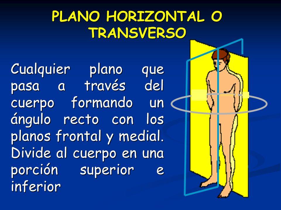 PLANO HORIZONTAL O TRANSVERSO Cualquier plano que pasa a través del cuerpo formando un ángulo recto con los planos frontal y medial. Divide al cuerpo