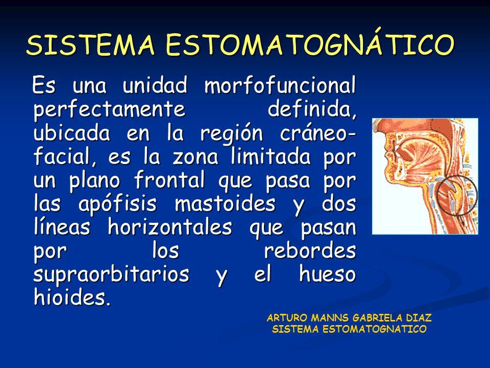 Es una unidad morfofuncional perfectamente definida, ubicada en la región cráneo- facial, es la zona limitada por un plano frontal que pasa por las ap