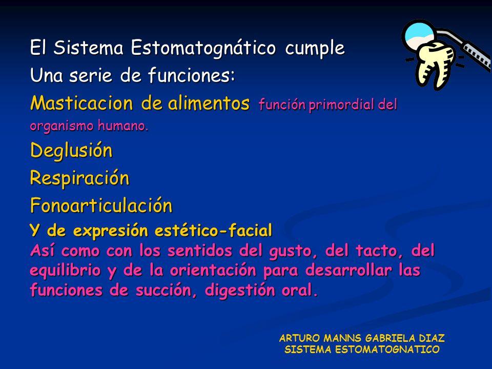 El Sistema Estomatognático cumple Una serie de funciones: Masticacion de alimentos función primordial del organismo humano. DeglusiónRespiraciónFonoar