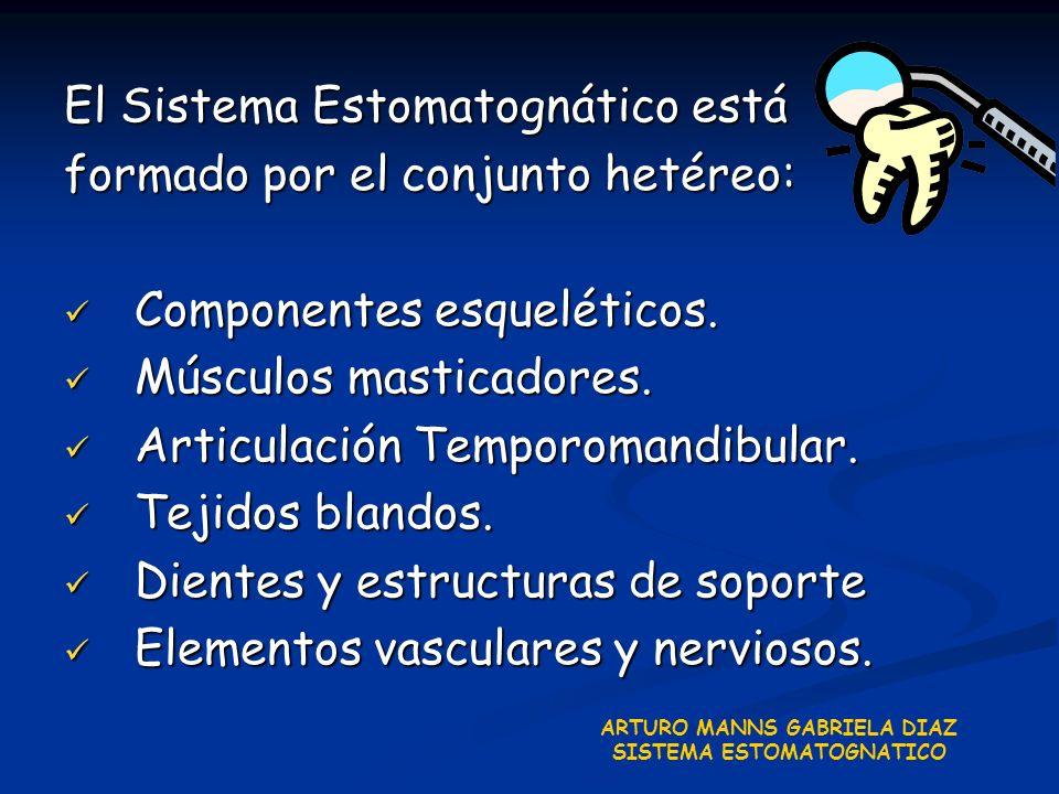 El Sistema Estomatognático está formado por el conjunto hetéreo: Componentes esqueléticos. Componentes esqueléticos. Músculos masticadores. Músculos m