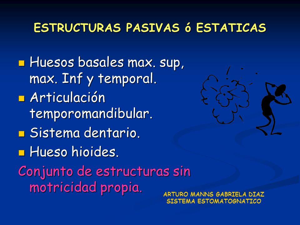 ESTRUCTURAS PASIVAS ó ESTATICAS Huesos basales max. sup, max. Inf y temporal. Huesos basales max. sup, max. Inf y temporal. Articulación temporomandib