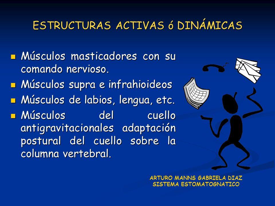 ESTRUCTURAS ACTIVAS ó DINÁMICAS Músculos masticadores con su comando nervioso. Músculos masticadores con su comando nervioso. Músculos supra e infrahi