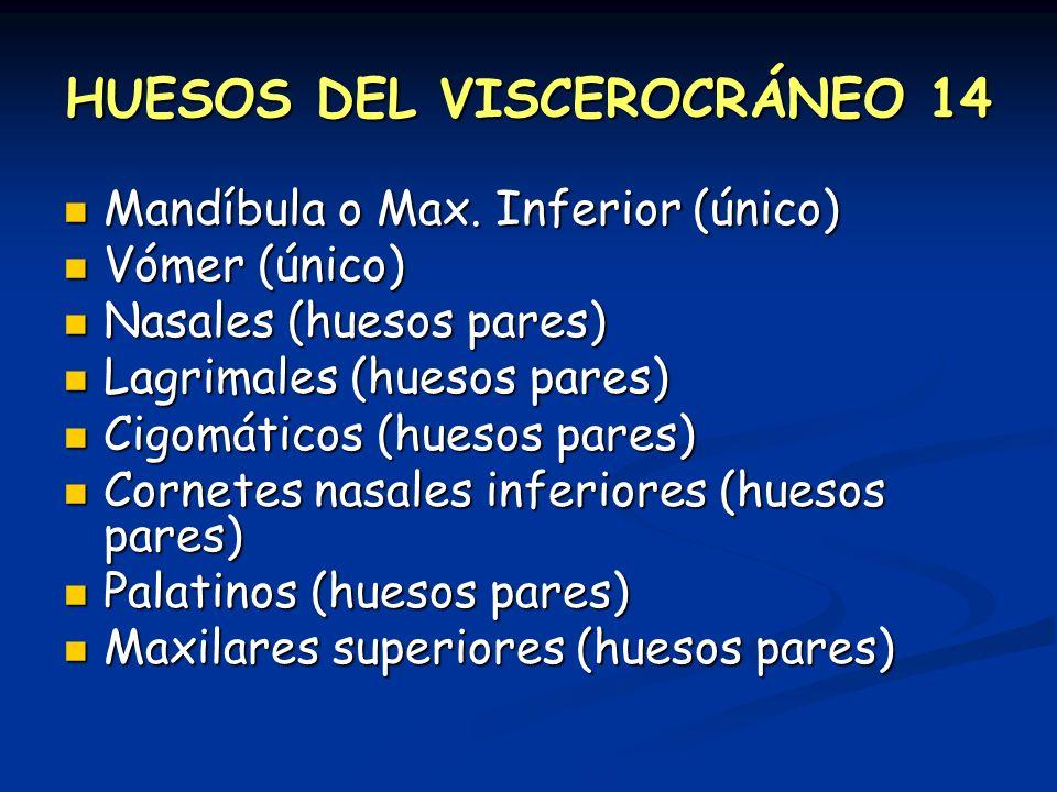 HUESOS DEL VISCEROCRÁNEO 14 Mandíbula o Max. Inferior (único) Mandíbula o Max. Inferior (único) Vómer (único) Vómer (único) Nasales (huesos pares) Nas