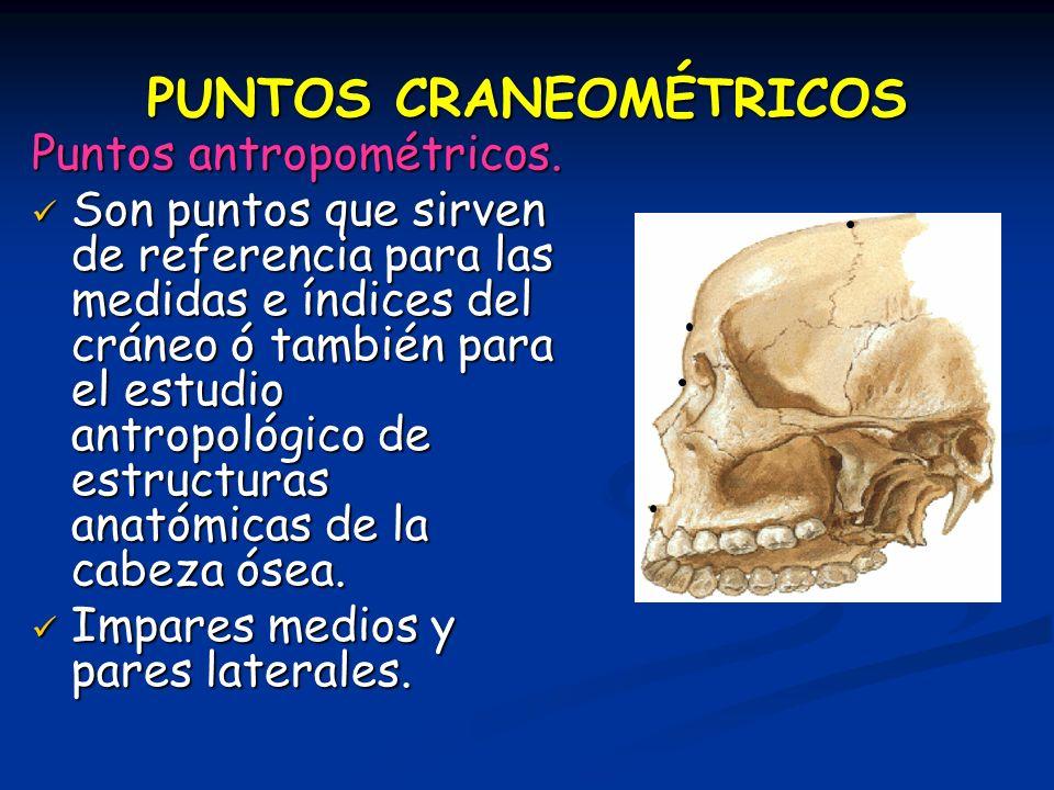 PUNTOS CRANEOMÉTRICOS Puntos antropométricos. Son puntos que sirven de referencia para las medidas e índices del cráneo ó también para el estudio antr