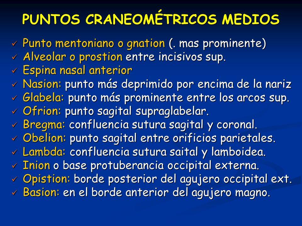 PUNTOS CRANEOMÉTRICOS MEDIOS Punto mentoniano o gnation (. mas prominente) Punto mentoniano o gnation (. mas prominente) Alveolar o prostion entre inc