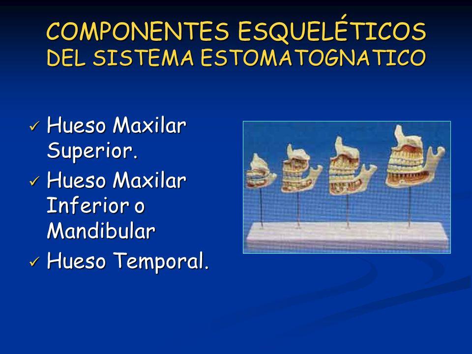 COMPONENTES ESQUELÉTICOS DEL SISTEMA ESTOMATOGNATICO Hueso Maxilar Superior. Hueso Maxilar Superior. Hueso Maxilar Inferior o Mandibular Hueso Maxilar