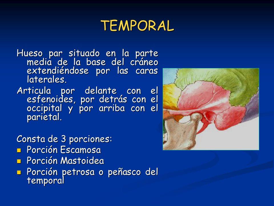TEMPORAL Hueso par situado en la parte media de la base del cráneo extendiéndose por las caras laterales. Articula por delante con el esfenoides, por