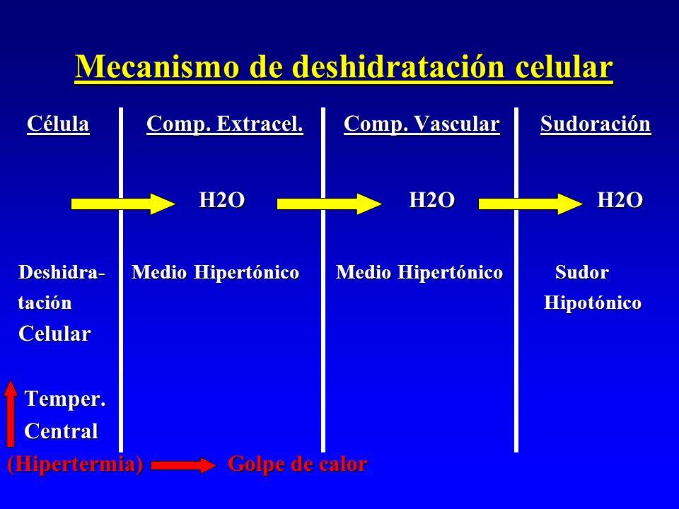 Mecanismo de deshidratación celular Célula Comp. Extracel. Comp. Vascular Sudoración Célula Comp. Extracel. Comp. Vascular Sudoración H2O H2O H2O H2O