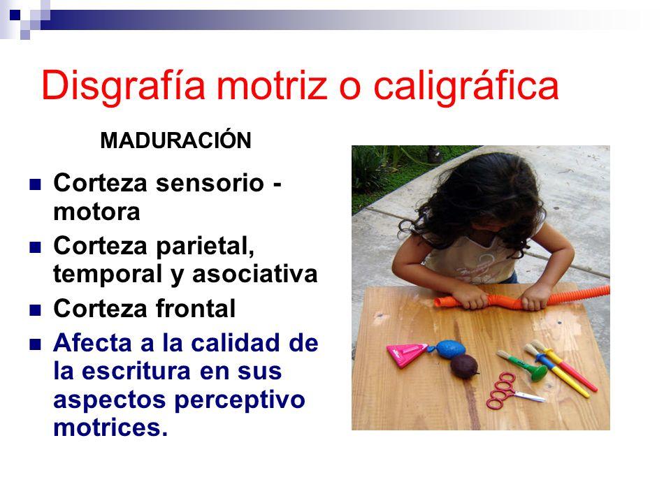 Disgrafía motriz o caligráfica MADURACIÓN Corteza sensorio - motora Corteza parietal, temporal y asociativa Corteza frontal Afecta a la calidad de la