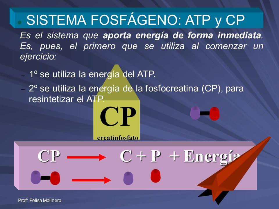 Prof: Felisa Molinero CP C + P + Energía CP creatínfosfato SISTEMA FOSFÁGENO: ATP y CP Es el sistema que aporta energía de forma inmediata. Es, pues,