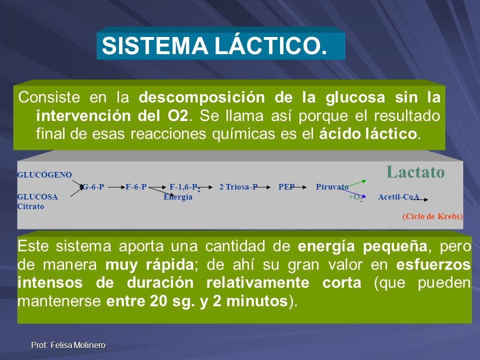 Prof: Felisa Molinero Energí a GLUCÓGENO Lactato G-6-P F-6-P F-1,6-P 2 2 Triosa-P PEP Piruvato GLUCOSA Energía +O 2 Acetil-CoA Citrato (Ciclo de Krebs