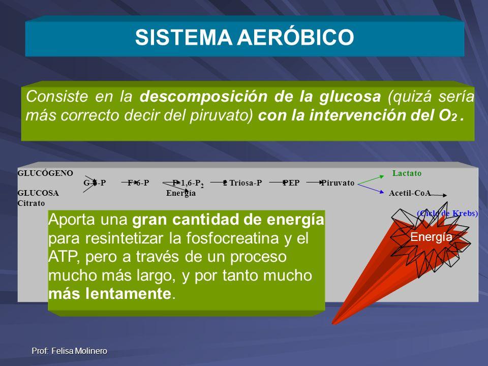 Prof: Felisa Molinero Energi Energía +O 2 Consiste en la descomposición de la glucosa (quizá sería más correcto decir del piruvato) con la intervenció
