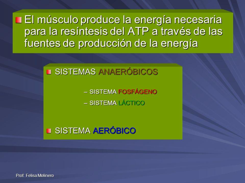 Prof: Felisa Molinero SISTEMAS ANAERÓBICOS –SISTEMA FOSFÁGENO –SISTEMA LÁCTICO SISTEMA AERÓBICO El músculo produce la energía necesaria para la resínt