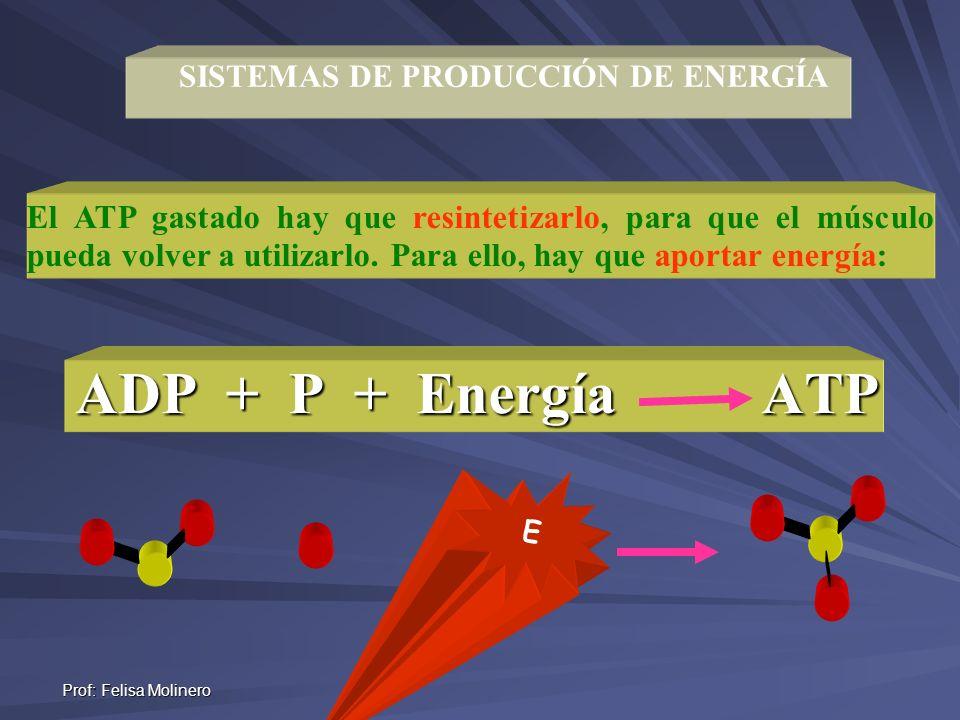 Prof: Felisa Molinero SISTEMAS DE PRODUCCIÓN DE ENERGÍA El ATP gastado hay que resintetizarlo, para que el músculo pueda volver a utilizarlo. Para ell