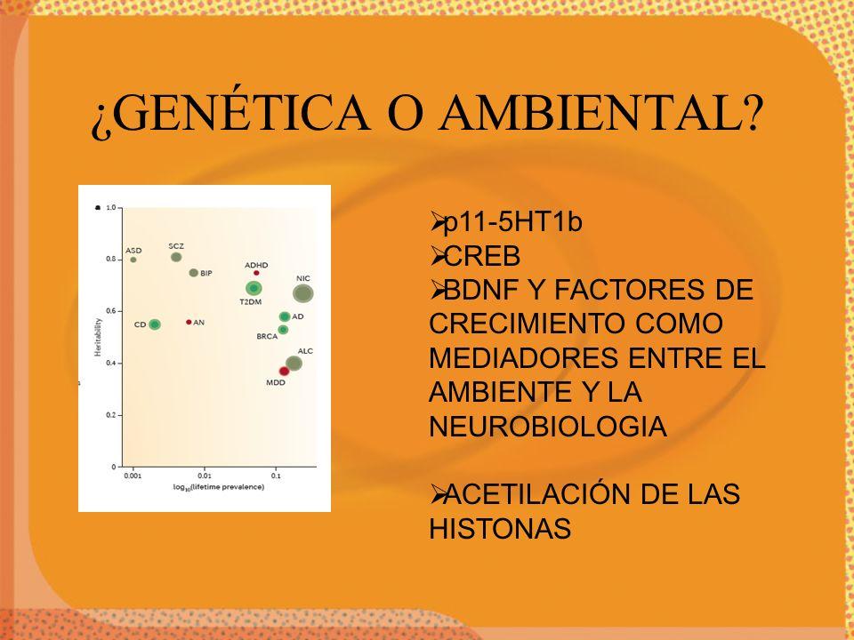 ¿GENÉTICA O AMBIENTAL? p11-5HT1b CREB BDNF Y FACTORES DE CRECIMIENTO COMO MEDIADORES ENTRE EL AMBIENTE Y LA NEUROBIOLOGIA ACETILACIÓN DE LAS HISTONAS