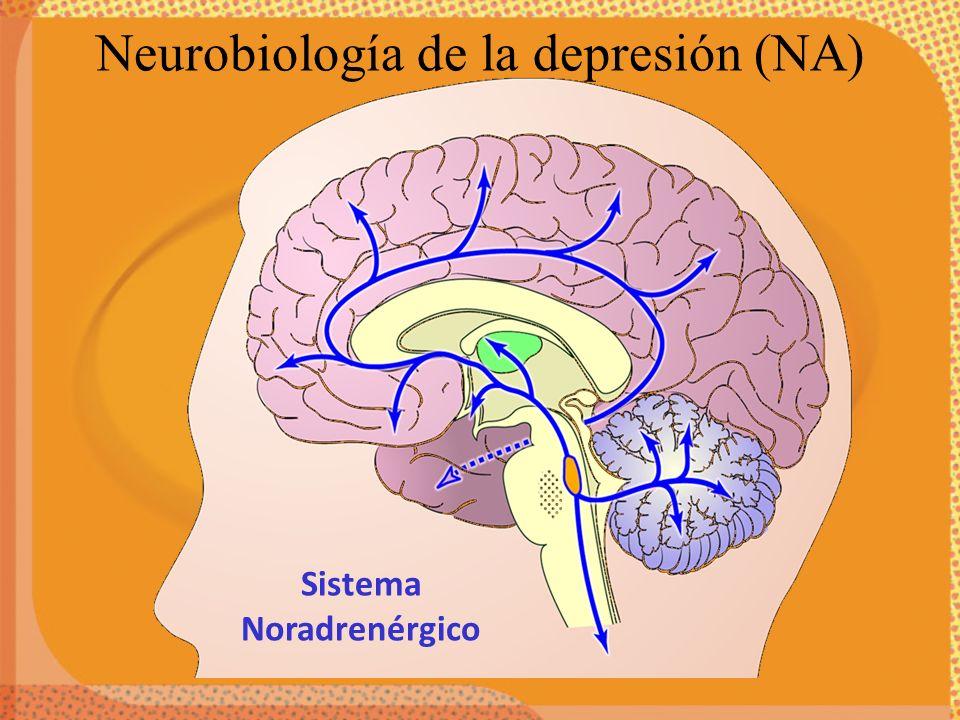 Sistema Noradrenérgico Neurobiología de la depresión (NA)