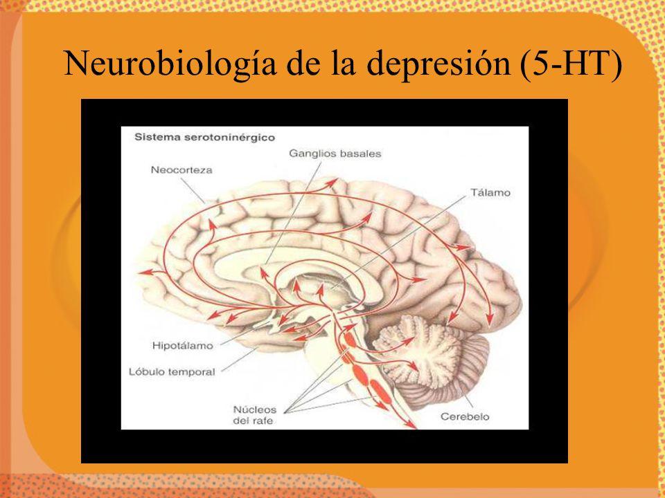 Neurobiología de la depresión (5-HT)