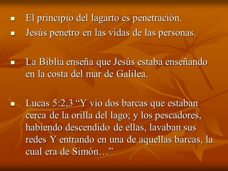 El principio del lagarto es penetración. El principio del lagarto es penetración. Jesús penetro en las vidas de las personas. Jesús penetro en las vid