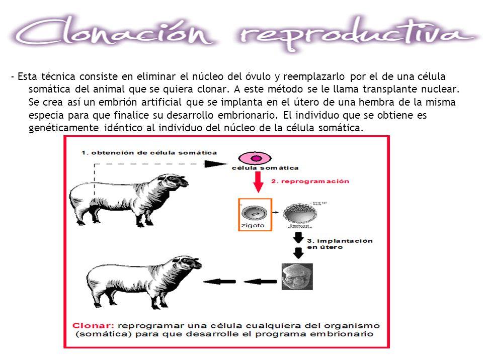 - Esta técnica consiste en eliminar el núcleo del óvulo y reemplazarlo por el de una célula somática del animal que se quiera clonar. A este método se