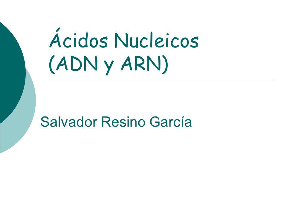 Ácidos Nucleicos (ADN y ARN) Salvador Resino García