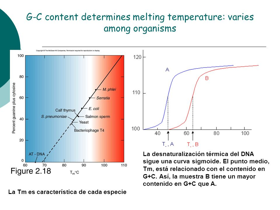 G-C content determines melting temperature: varies among organisms La desnaturalización térmica del DNA sigue una curva sigmoide. El punto medio, Tm,