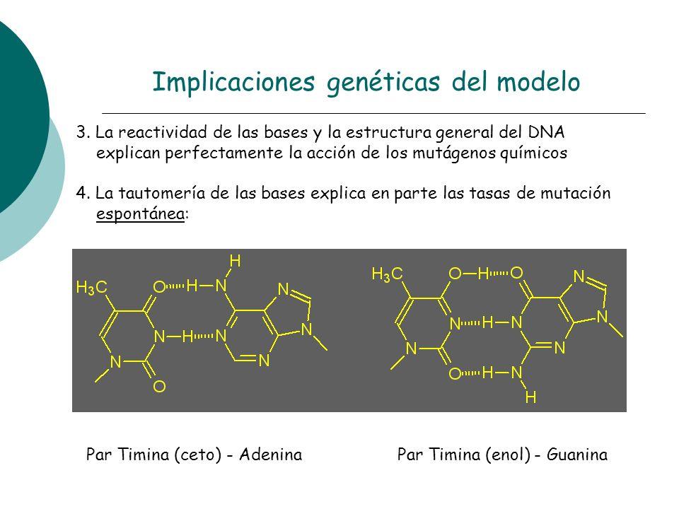 3. La reactividad de las bases y la estructura general del DNA explican perfectamente la acción de los mutágenos químicos 4. La tautomería de las base