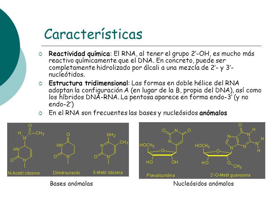 Características Reactividad química: El RNA, al tener el grupo 2-OH, es mucho más reactivo químicamente que el DNA. En concreto, puede ser completamen