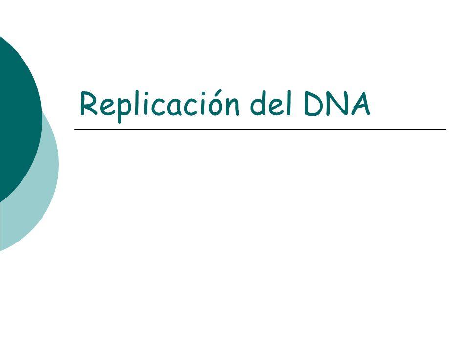 Replicación del DNA