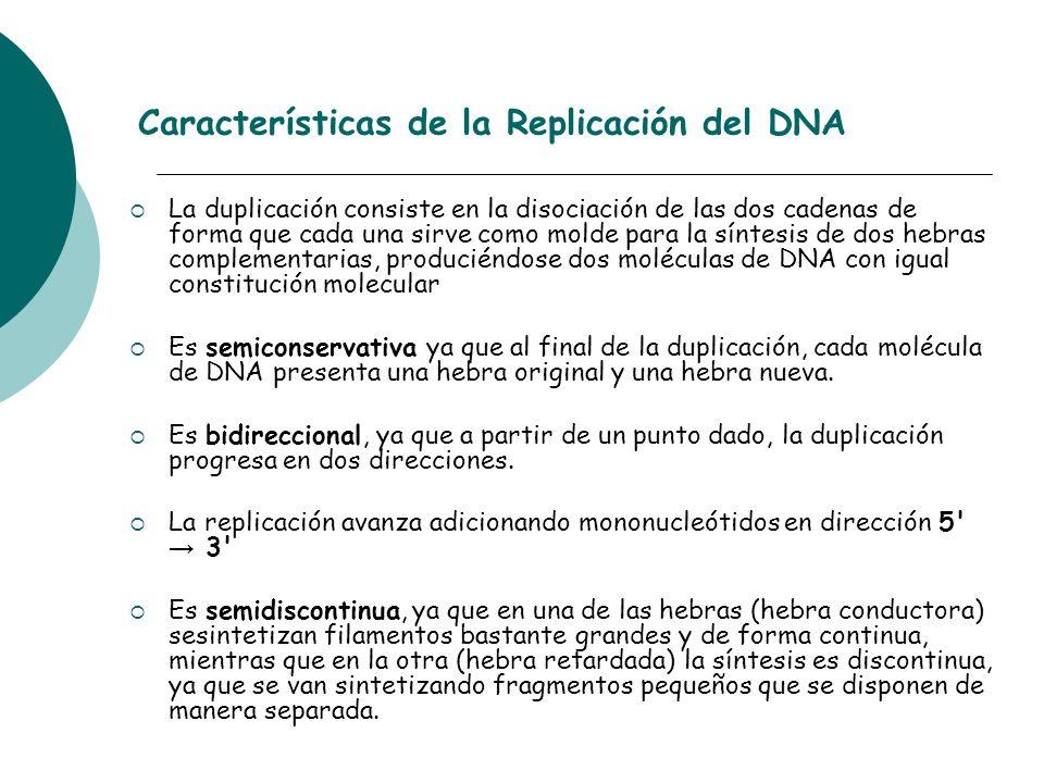 Características de la Replicación del DNA La duplicación consiste en la disociación de las dos cadenas de forma que cada una sirve como molde para la