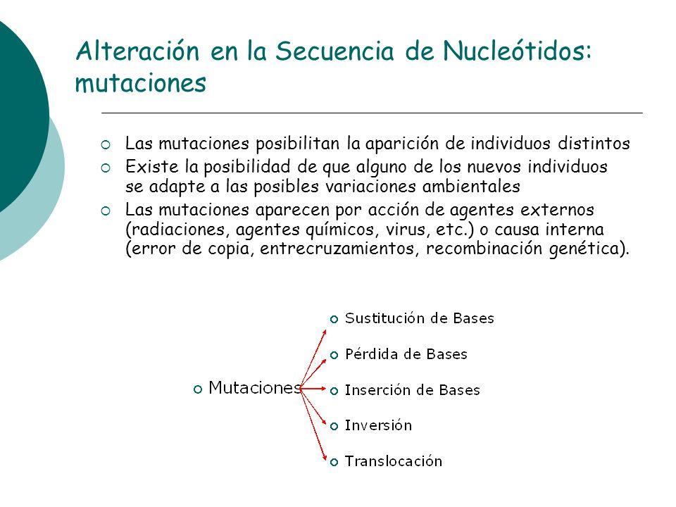 Alteración en la Secuencia de Nucleótidos: mutaciones Las mutaciones posibilitan la aparición de individuos distintos Existe la posibilidad de que alg