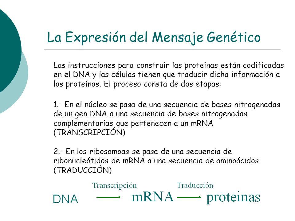 La Expresión del Mensaje Genético Las instrucciones para construir las proteínas están codificadas en el DNA y las células tienen que traducir dicha i