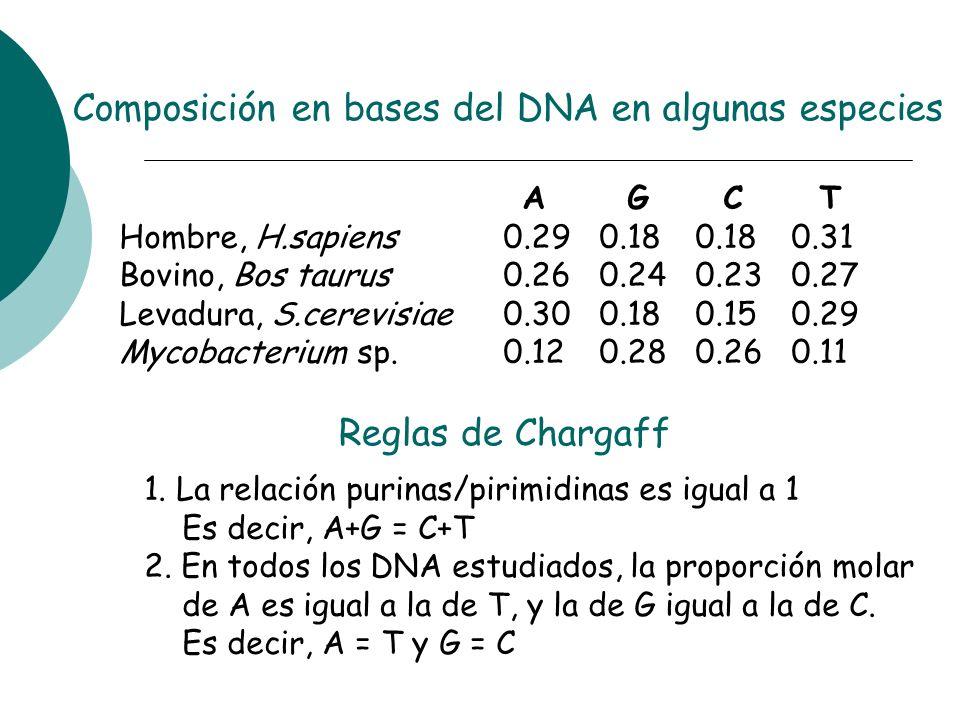 A G C T Hombre, H.sapiens0.290.180.180.31 Bovino, Bos taurus0.260.240.230.27 Levadura, S.cerevisiae0.300.180.150.29 Mycobacterium sp.0.120.280.260.11