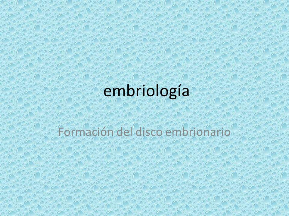 embriología Formación del disco embrionario