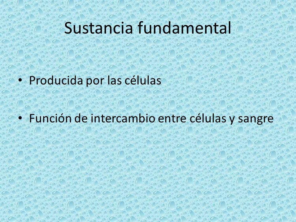 Sustancia fundamental Producida por las células Función de intercambio entre células y sangre