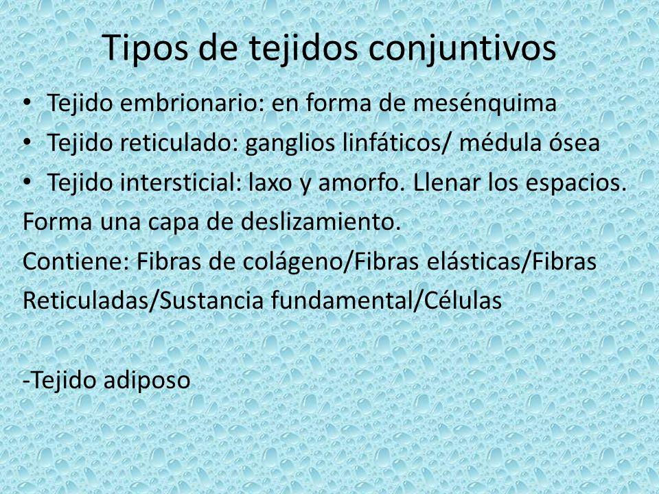 Tipos de tejidos conjuntivos Tejido embrionario: en forma de mesénquima Tejido reticulado: ganglios linfáticos/ médula ósea Tejido intersticial: laxo